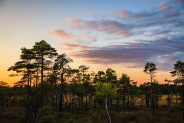 Solnedgång över Blängsmossen/ Blängs mosse